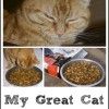 My Great Cats