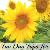 Fun Day Trips for Kansas Families