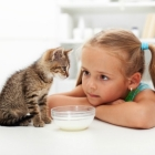 Cat Care Tips for Kids