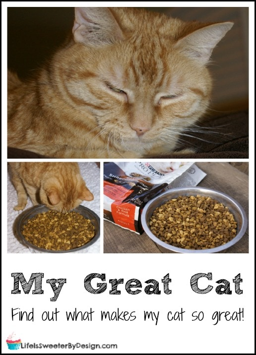 my great cat