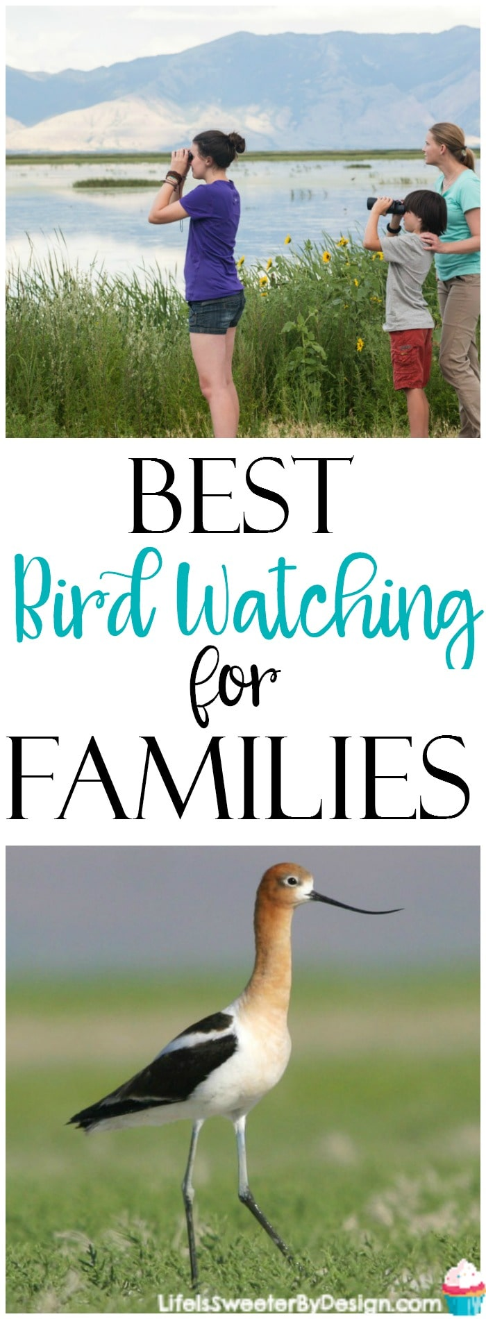 Bird watching is a great family activity.  There is a great place for families to go bird watching in Box Elder County Utah.  There are over 250 species of birds in this area! Such a great place for an outdoor family vacation.