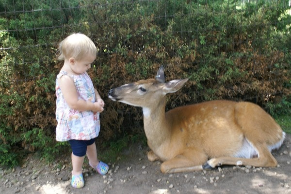 Wisconsin Deer Park is fun for families