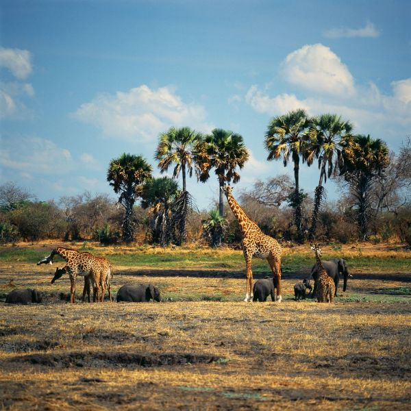 visit Africa with kids
