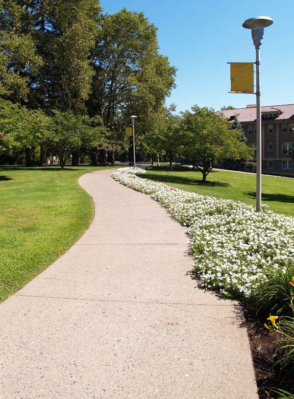 sidewalk of a college campus