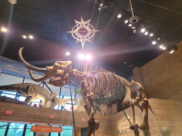 dinosaur skeleton at the Creation Museum
