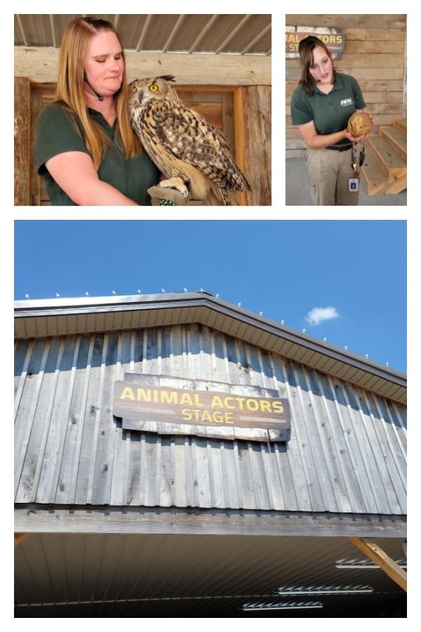 animal encounter at the Ararat Ridge Zoo
